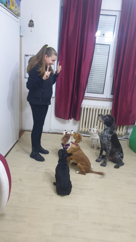 marija marjanovic , mn obuka pasa i edukacija vlasnika, edukativni centar MN