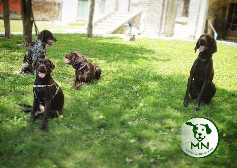 cuvanje pasa, pansion za pse